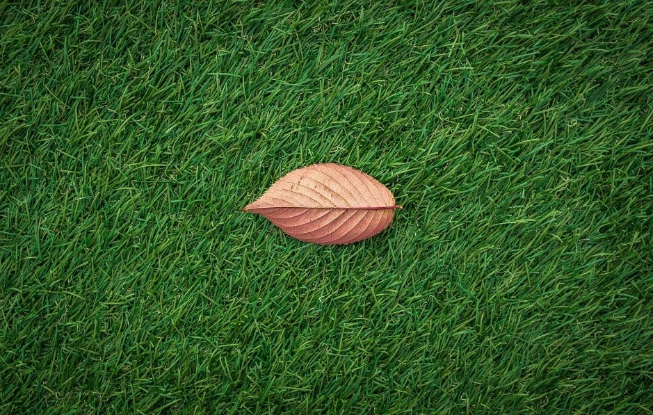 Homeowners Should Switch to the More Eco-Friendly Artificial Turf