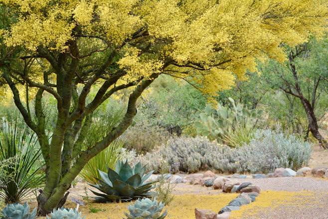 Benefits Of Adding Trees And Tall Plants To Your Landscape