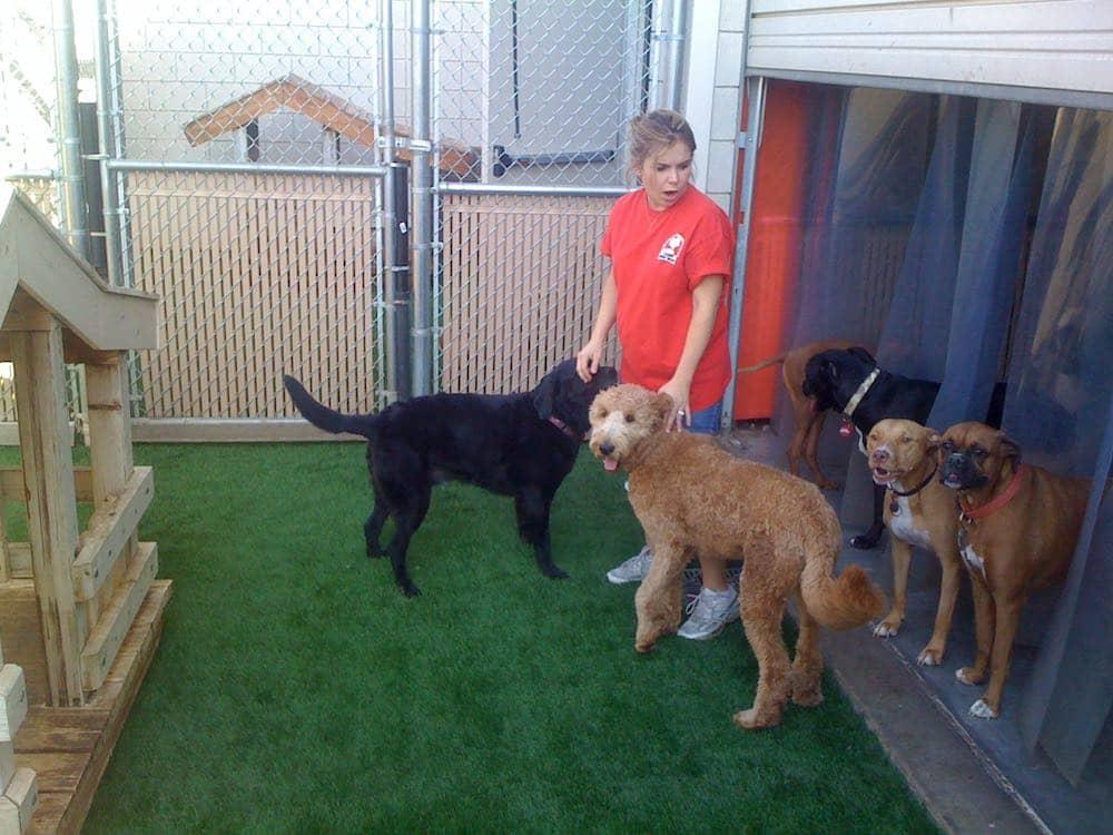 Pet Facilities 2